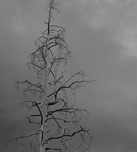 "Photo: ""Lone Tree"""