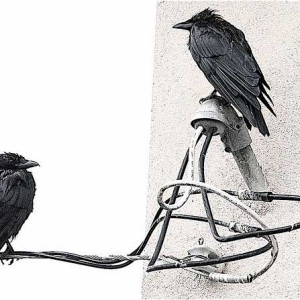 """A Whiter Shade of Pale - Wet Crows Study 1"" by Patrick Doheny"